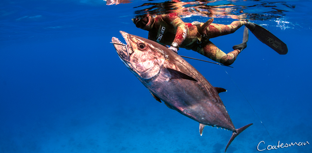 Guided-Spearfishing-Charters-Dogtooth