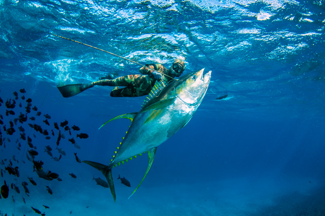 spearfishing ascension island with chris coates