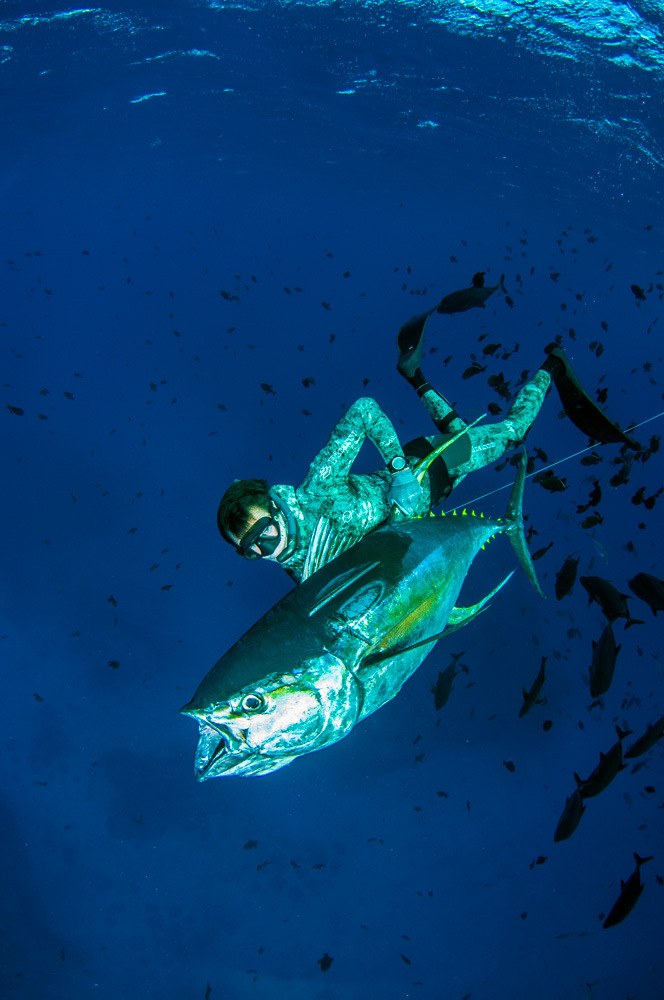 cheap ascension island spearfishing trips