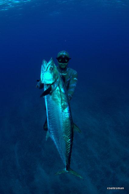 Massive Spanish Mackerel - Barren Islands 2012 - photo Coatesman