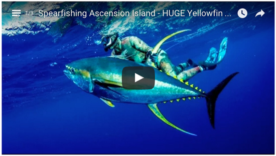spearfishing video ascension isalnd
