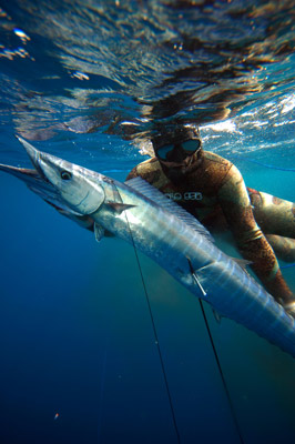 VIP spearfishing safari Inhaca Mozambique