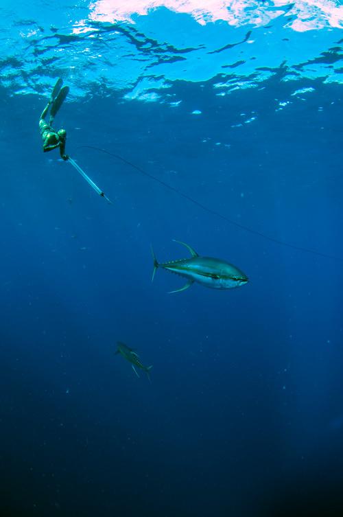 spearfishing paradise