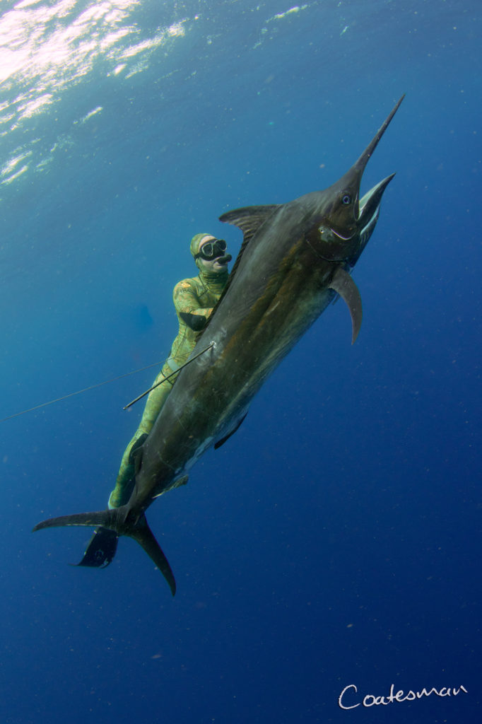 spearfishing marlin mozambique