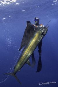 spearfishing southern mozambi